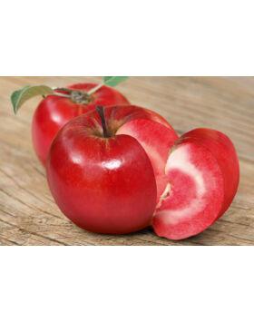 Vörösbelű (Sonja) alma