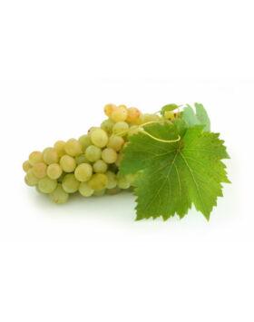 'Afúz-Ali' csemegeszőlő