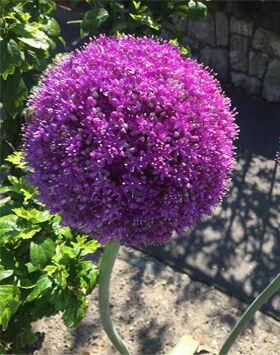 Kertészeti tanfolyam 2017 ősz