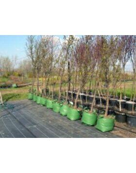 Agroszövet 130g/m2, 100mx105cm