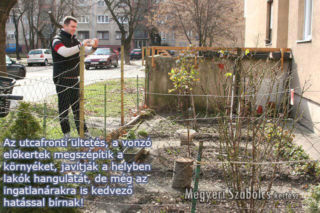 utcafronti ültetés Megyeri Szabolcs kertészete