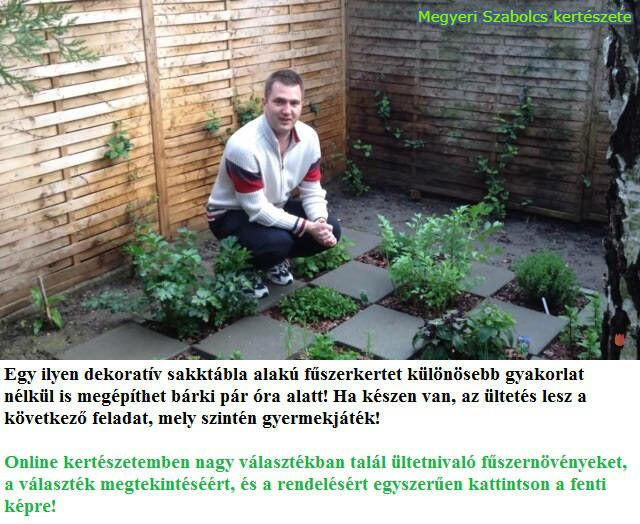 fűszernövények, gyógynövények vásárlása a Megyeri kertészetben