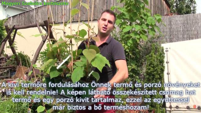 kivi vásárlás Megyeri kertészet