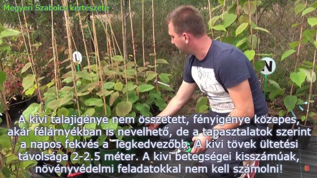 kivi vásárlás Megyeri Szabolcs kertészete