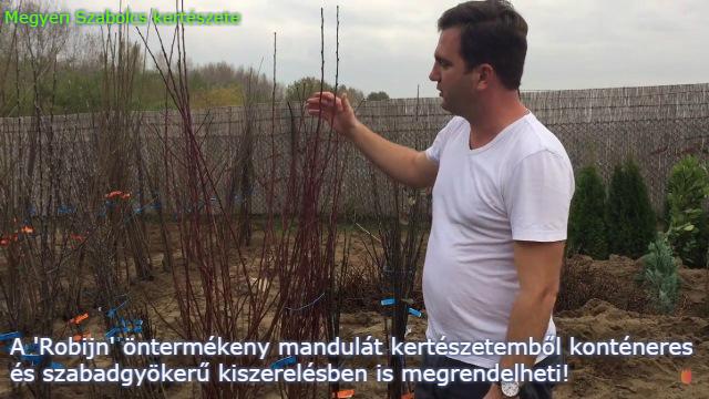 öntermékeny mandulafa csemete vásárlás Megyeri kertészet