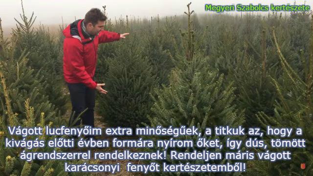 vágott karácsonyfa rendelés Megyeri kertészet