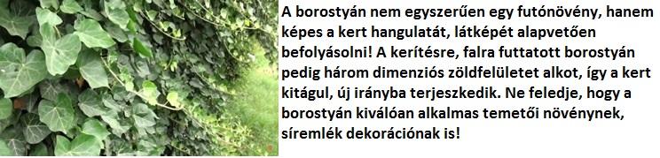 borostyán eladó