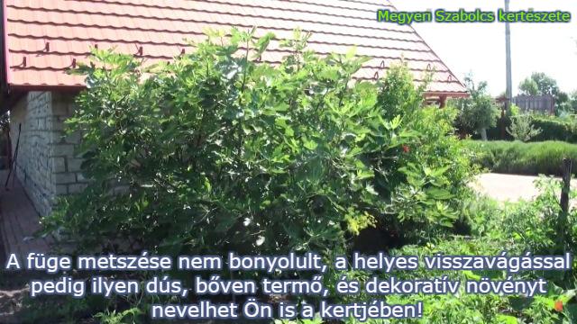 füge vásárlás Megyeri kertészet