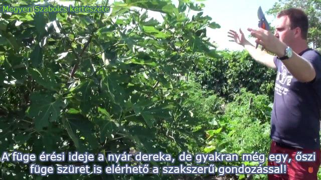 füge ára Megyeri kertészet