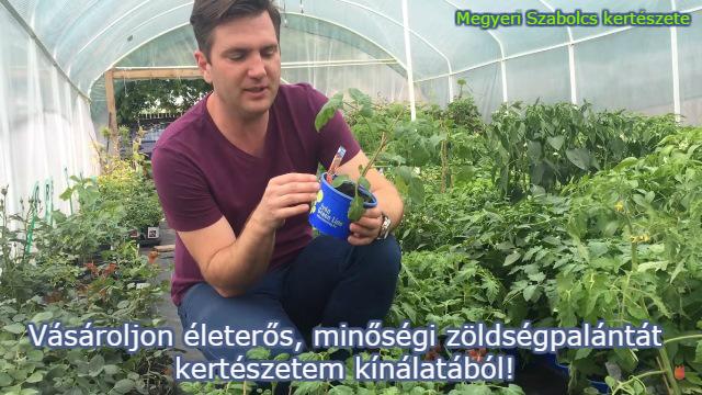 zöldségpalánta eladó