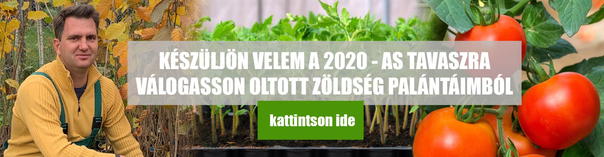 2020 palánta