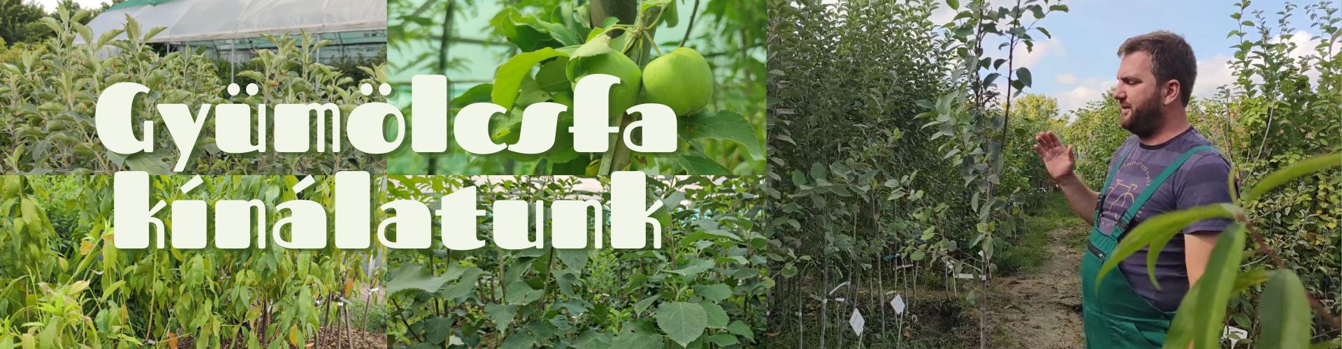 Gyümölcsfa kínálatunk
