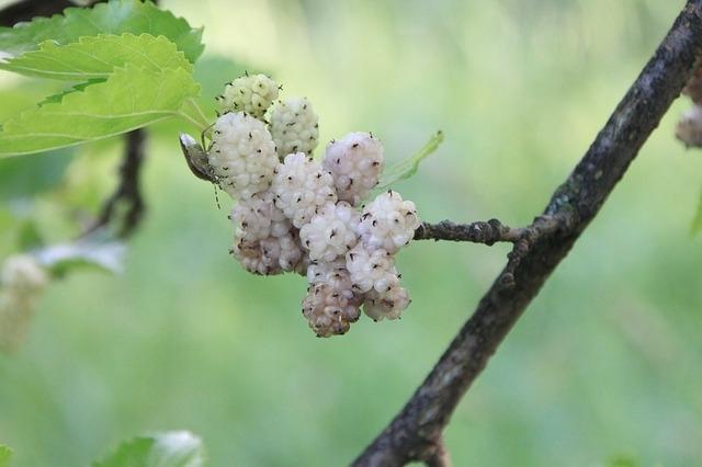 Eperfa rendelhető a Megyeri kertészetből!