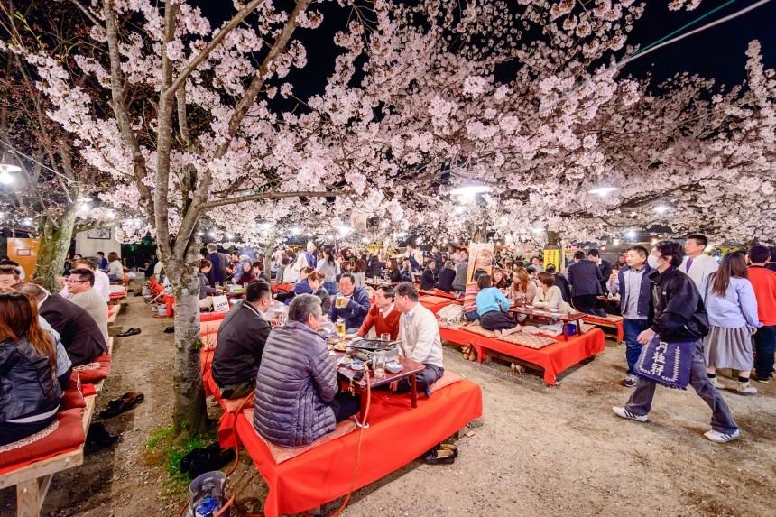 hanami cseresznye virág ünnep