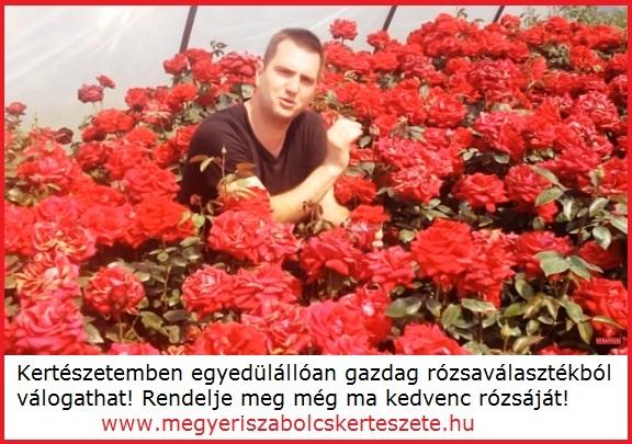 Rózsafajták széles választéka kapható a Megyeri kertészetben!