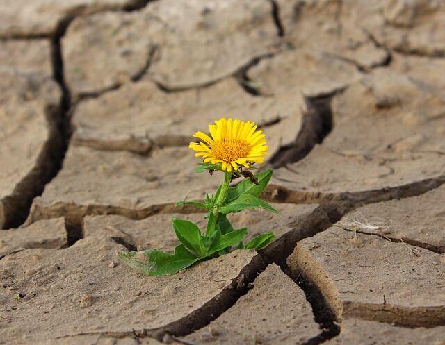 Érdemes a szárazságot jól tűrő növények telepítésében gondolkodni.