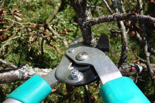 Az őszi metszés elengedhetetlen kerti munka!