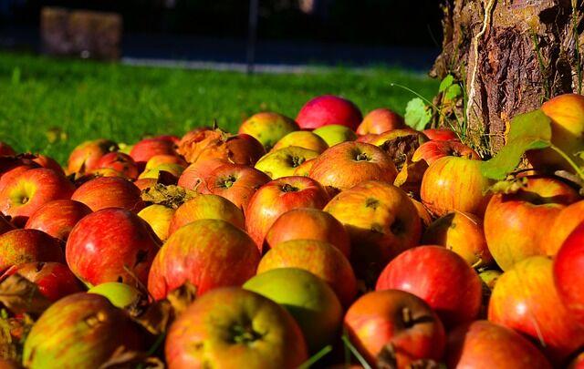 Ideje begyűjteni az almákat is