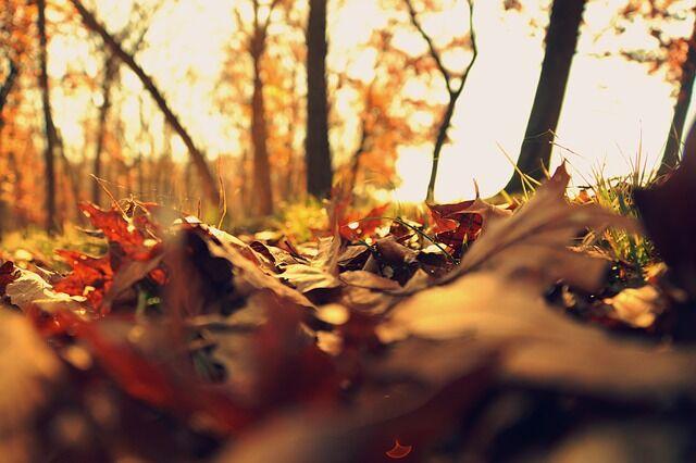 Közeleg az ősz