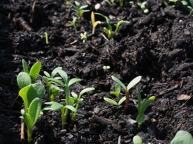 A jó minőségű földben szebben fejlődnek a növények
