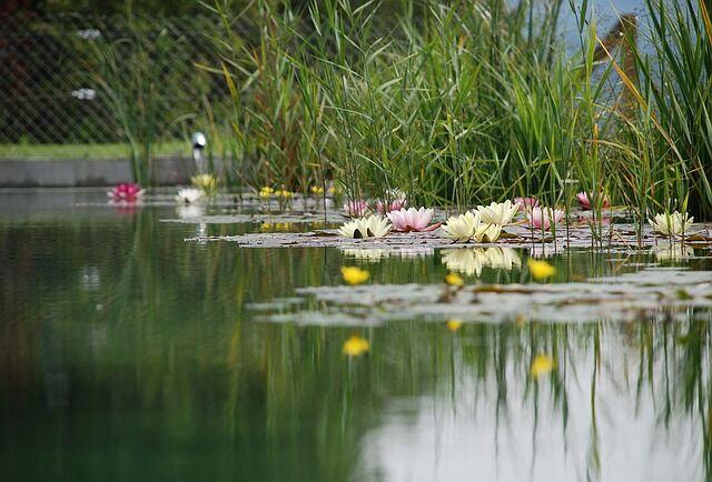 Kerti tó az otthonában