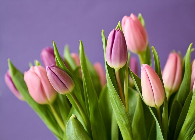 Önnek is lehetnek ilyen szép tulipánjai