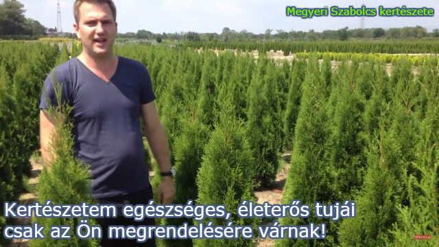 Tuja-félék vásárlása a Megyeri kertészetben!