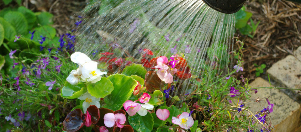 Növények nyári öntözése