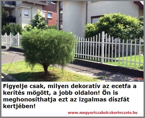 Ecetfa rendelhető a Megyeri kertészetből!