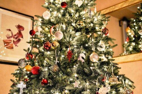 Ezüstfenyő karácsonyfa rendelhető kertészetemből!