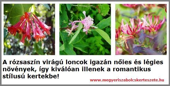 Futólonc fajták vásárolhatók a Megyeri kertészetben!