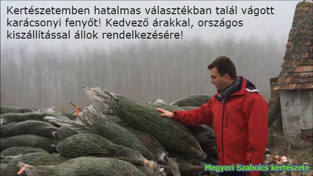 Karácsonyfa kiszállítás országosan a Megyeri kertészetből!