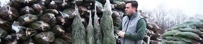 Vágott karácsonyfa kiszállítás