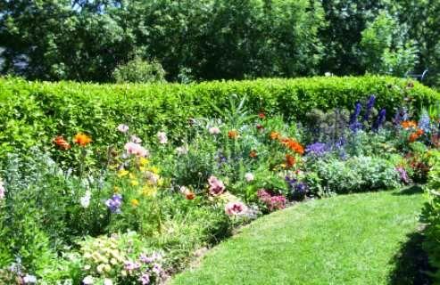 Természetközeli kertekbe való növények