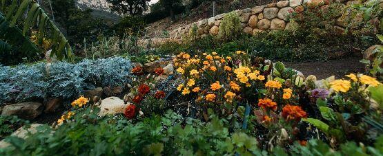Természetközeli kertstílus kialakítása