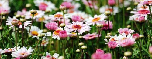 Természetes, vadvirágos kertstílus