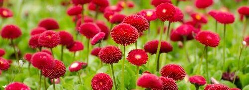 Természetközeli kertbe ültethető növények