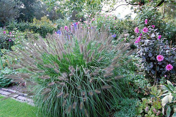 Díszfüvek kaphatók a Megyeri kertészetben!