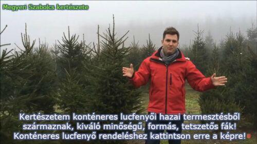 Konténeres luc karácsonyfa rendelhető kiszállítással!