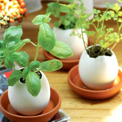 Zöldség palánták kaphatók a Megyeri kertészetben!