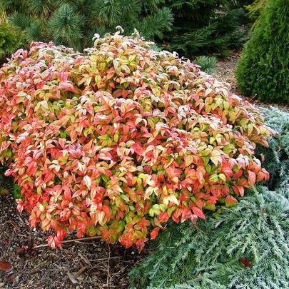 Egy kertrész csak örökzöldekből! A téli hónapok színtelen jelzője okafogyottá válik.