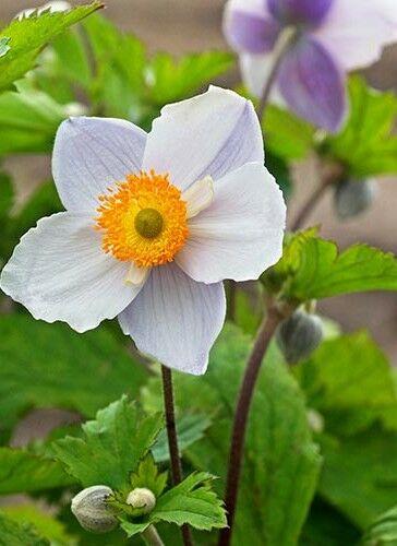 Színvilága a vidám tavaszt idézi