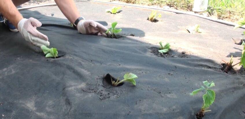 Geotextil használata a kertben