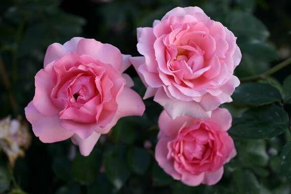 Csoportosan is meseszépen mutatnak a virágok