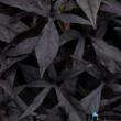 Ipomoea batatas 'Solar Power® Black' – Édesburgonya