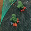 HDPE extrudált madárháló, rombusz szemformájú - BIRDNET (fekete)