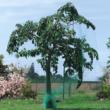 HDPE extrudált madárháló, rombusz szemformájú - BIRDNET (zöld)
