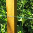 Uborkaháló PP (U-170/10) - TRELLINET (zöld)