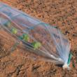 Rugalmas fóliasátor rúd - ARC PVC (zöld)