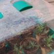 Mini üvegház szellőzővel - RAPID GROW